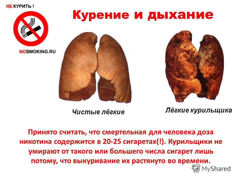 Курение и дыхание Чистые лёгкие Лёгкие курильщика Принято считать, что смертельная для человека доза никотина содержится в 20-25 сигаретах(!). Курильщики не умирают от такого или большего числа сигарет лишь потому, что выкуривание их растянуто во вре
