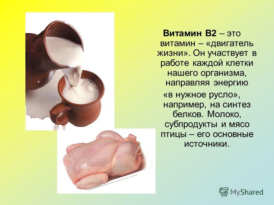 Витамин В2 – это витамин – «двигатель жизни». Он участвует в работе каждой клетки нашего организма, направляя энергию «в нужное русло», например, на синтез белков. Молоко, субпродукты и мясо птицы – его основные источники.