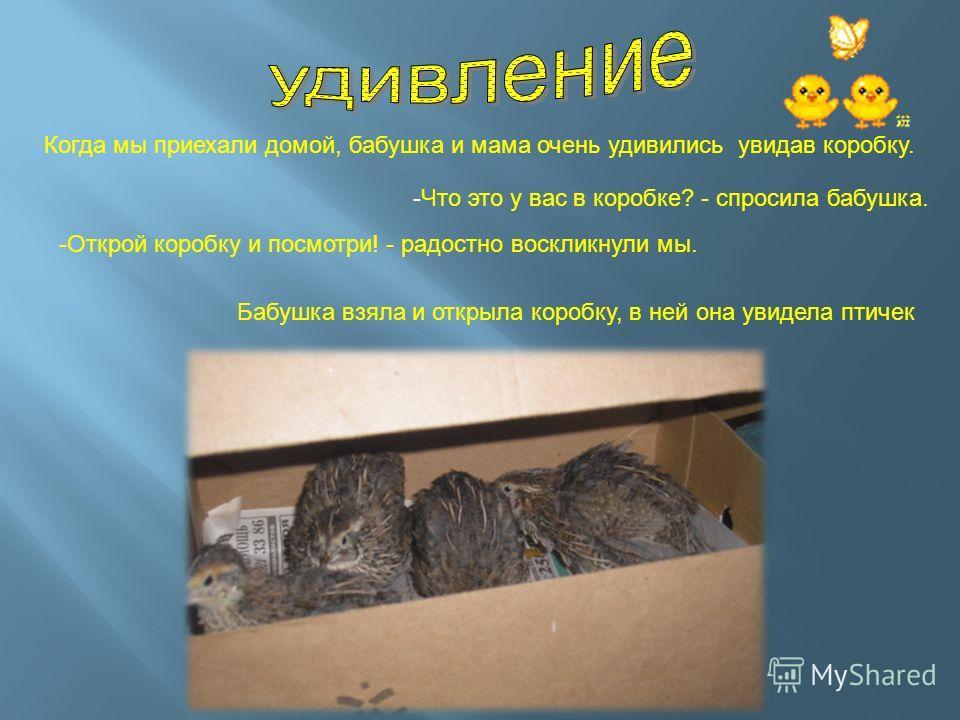 -Что это у вас в коробке? - спросила бабушка. Когда мы приехали домой, бабушка и мама очень удивились увидав коробку. -Открой коробку и посмотри! - радостно воскликнули мы. Бабушка взяла и открыла коробку, в ней она увидела птичек