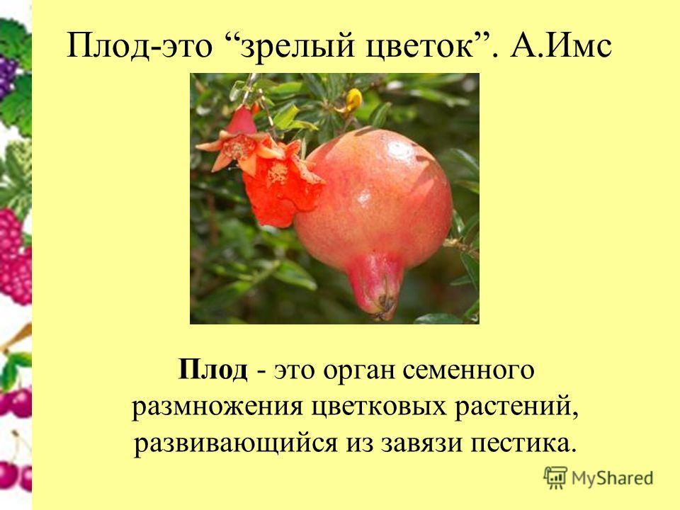 Плод-это зрелый цветок. А.Имс Плод - это орган семенного размножения цветковых растений, развивающийся из завязи пестика.