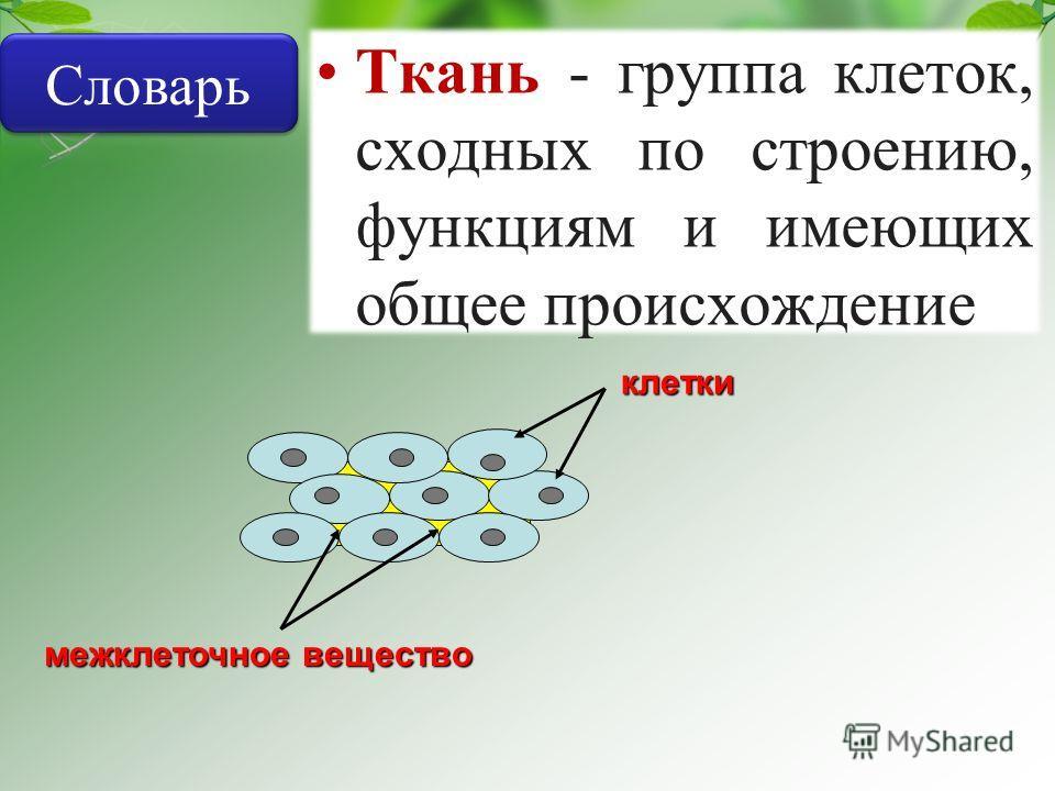 межклеточное вещество клетки Ткань - группа клеток, сходных по строению, функциям и имеющих общее происхождение Словарь