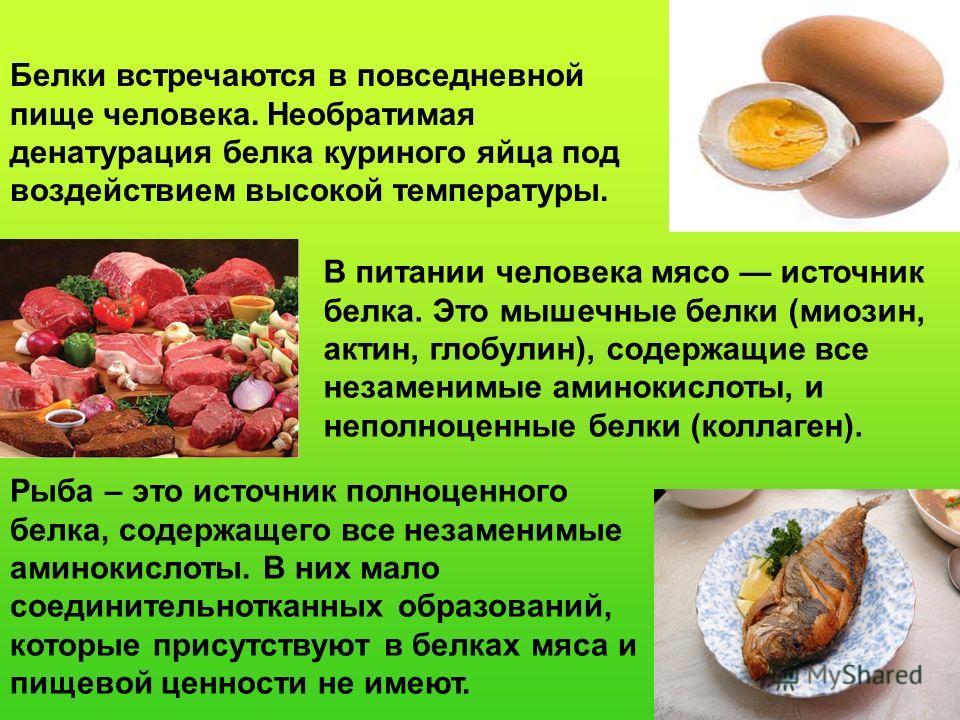 Белки встречаются в повседневной пище человека. Необратимая денатурация белка куриного яйца под воздействием высокой температуры. В питании человека мясо источник белка. Это мышечные белки (миозин, актин, глобулин), содержащие все незаменимые аминоки
