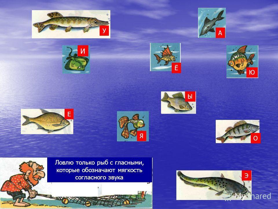 Ловлю только рыб с гласными, которые обозначают мягкость согласного звука О Я Ю Ы Ё Е У А Э И