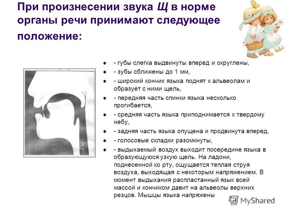 При произнесении звука Щ в норме органы речи принимают следующее положение: - губы слегка выдвинуты вперед и округлены, - зубы сближены до 1 мм, - широкий кончик языка поднят к альвеолам и образует с ними щель, - передняя часть спинки языка несколько