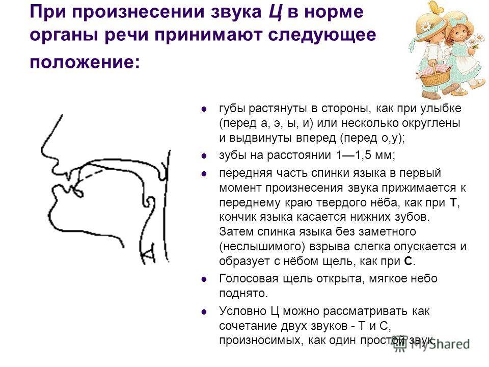 При произнесении звука Ц в норме органы речи принимают следующее положение: губы растянуты в стороны, как при улыбке (перед а, э, ы, и) или несколько округлены и выдвинуты вперед (перед о,у); зубы на расстоянии 11,5 мм; передняя часть спинки языка в