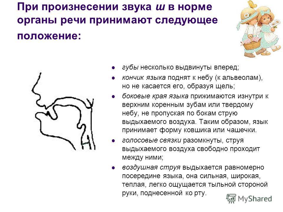 При произнесении звука ш в норме органы речи принимают следующее положение: губы несколько выдвинуты вперед; кончик языка поднят к небу (к альвеолам), но не касается его, образуя щель; боковые края языка прижимаются изнутри к верхним коренным зубам и