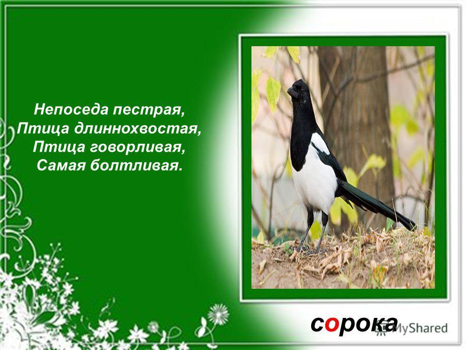 Кто в лесу глухом живёт, Неуклюжий, косолапый? Летом ест малину, мёд А зимой сосёт он лапу. медведь