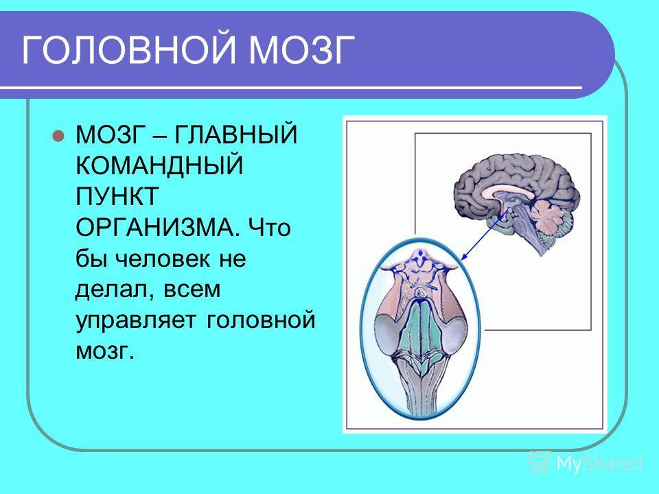 ГОЛОВНОЙ МОЗГ МОЗГ – ГЛАВНЫЙ КОМАНДНЫЙ ПУНКТ ОРГАНИЗМА. Что бы человек не делал, всем управляет головной мозг.