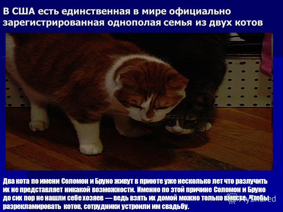 В США есть единственная в мире официально зарегистрированная однополая семья из двух котов Два кота по имени Соломон и Бруно живут в приюте уже несколько лет что разлучить их не представляет никакой возможности. Именно по этой причине Соломон и Бруно