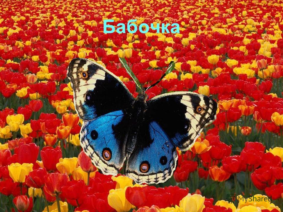 Гусеница Я - прожорливая гусеница, толстеть мне нужно срочно, по цветочкам ползаю, кушаю листочки, хрум-хрум. Наелась, спать завалилась, проснулась, бабочкой обернулась!