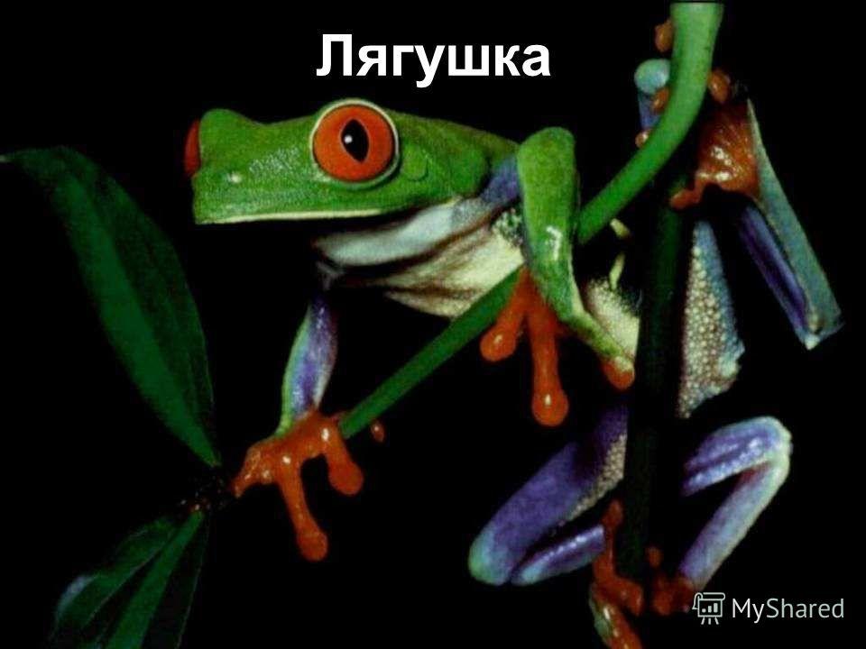 Головастик Всего голова и хвостик, Я - маленький головастик, скажу по секрету на ушко, я стану зелёной лягушкой! Ква – ква!