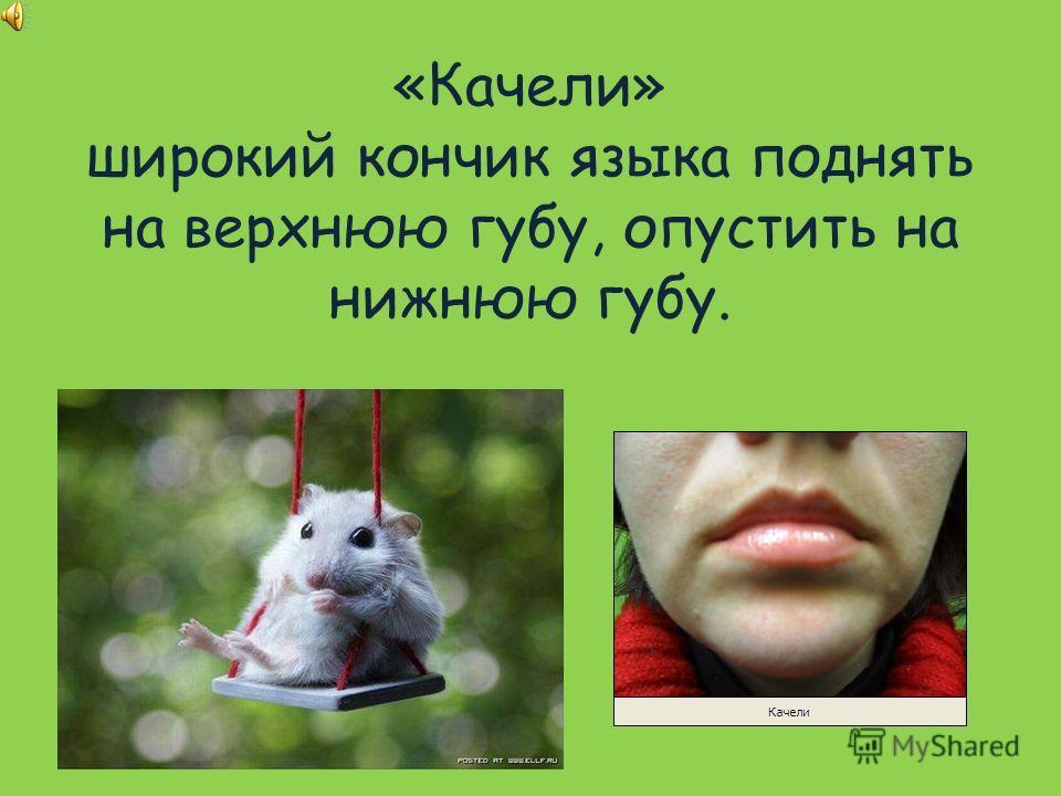 «Качели» широкий кончик языка поднять на верхнюю губу, опустить на нижнюю губу.