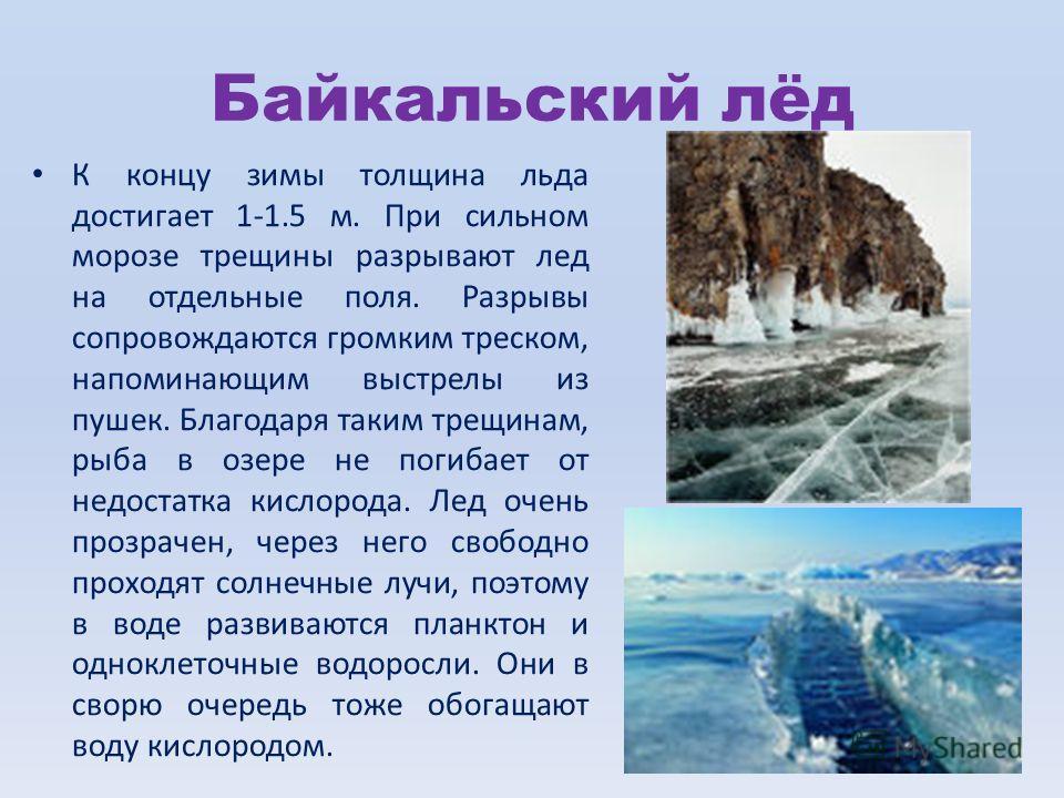 Байкальский лёд К концу зимы толщина льда достигает 1-1.5 м. При сильном морозе трещины разрывают лед на отдельные поля. Разрывы сопровождаются громким треском, напоминающим выстрелы из пушек. Благодаря таким трещинам, рыба в озере не погибает от нед