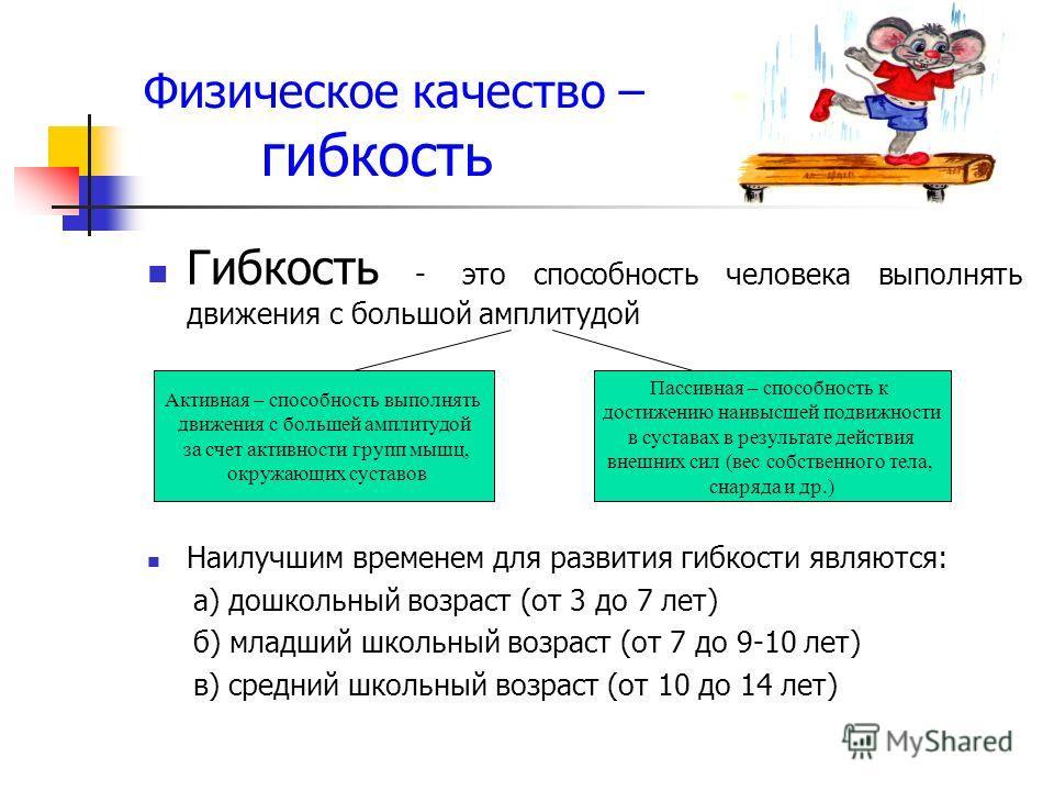 Физическое качество – гибкость Гибкость - это способность человека выполнять движения с большой амплитудой Наилучшим временем для развития гибкости являются: а) дошкольный возраст (от 3 до 7 лет) б) младший школьный возраст (от 7 до 9-10 лет) в) сред