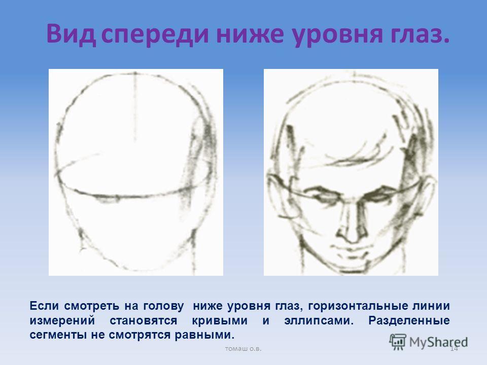 Вид спереди ниже уровня глаз. Если смотреть на голову ниже уровня глаз, горизонтальные линии измерений становятся кривыми и эллипсами. Разделенные сегменты не смотрятся равными. 14томаш о.в.
