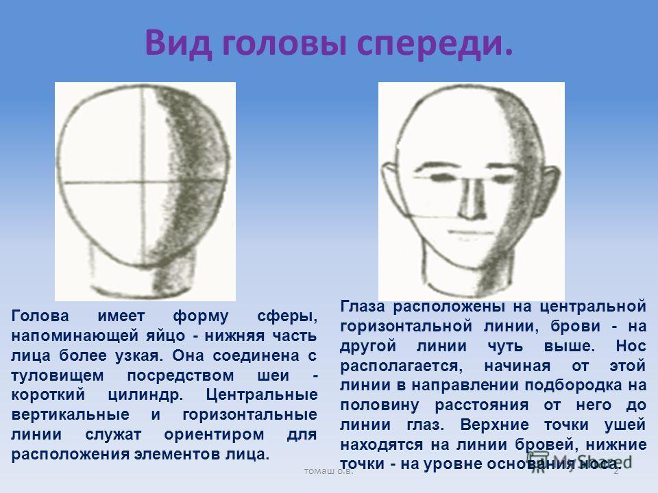 Вид головы спереди. Голова имеет форму сферы, напоминающей яйцо - нижняя часть лица более узкая. Она соединена с туловищем посредством шеи - короткий цилиндр. Центральные вертикальные и горизонтальные линии служат ориентиром для расположения элементо