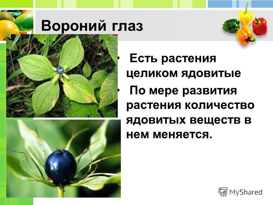 Вороний глаз Есть растения целиком ядовитые По мере развития растения количество ядовитых веществ в нем меняется.