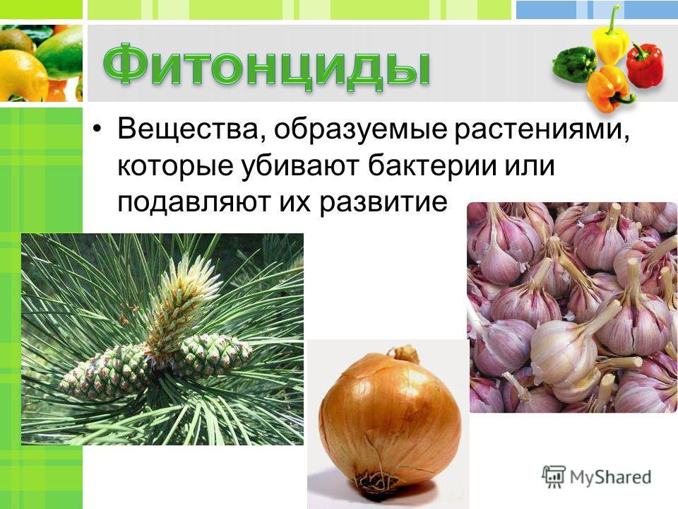 Вещества, образуемые растениями, которые убивают бактерии или подавляют их развитие