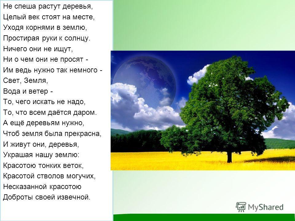 Не спеша растут деревья, Целый век стоят на месте, Уходя корнями в землю, Простирая руки к солнцу. Ничего они не ищут, Ни о чем они не просят - Им ведь нужно так немного - Свет, Земля, Вода и ветер - То, чего искать не надо, То, что всем даётся даром