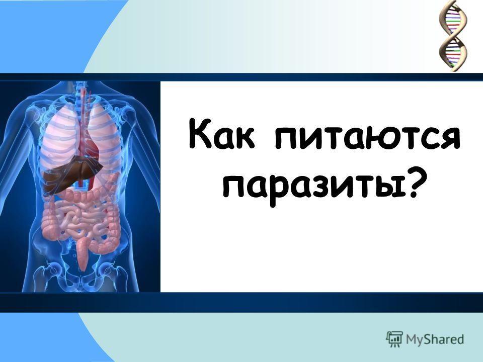 Как питаются паразиты?
