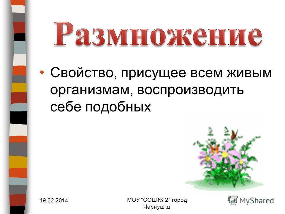 Свойство, присущее всем живым организмам, воспроизводить себе подобных 19.02.2014 МОУ СОШ 2 город Чернушка