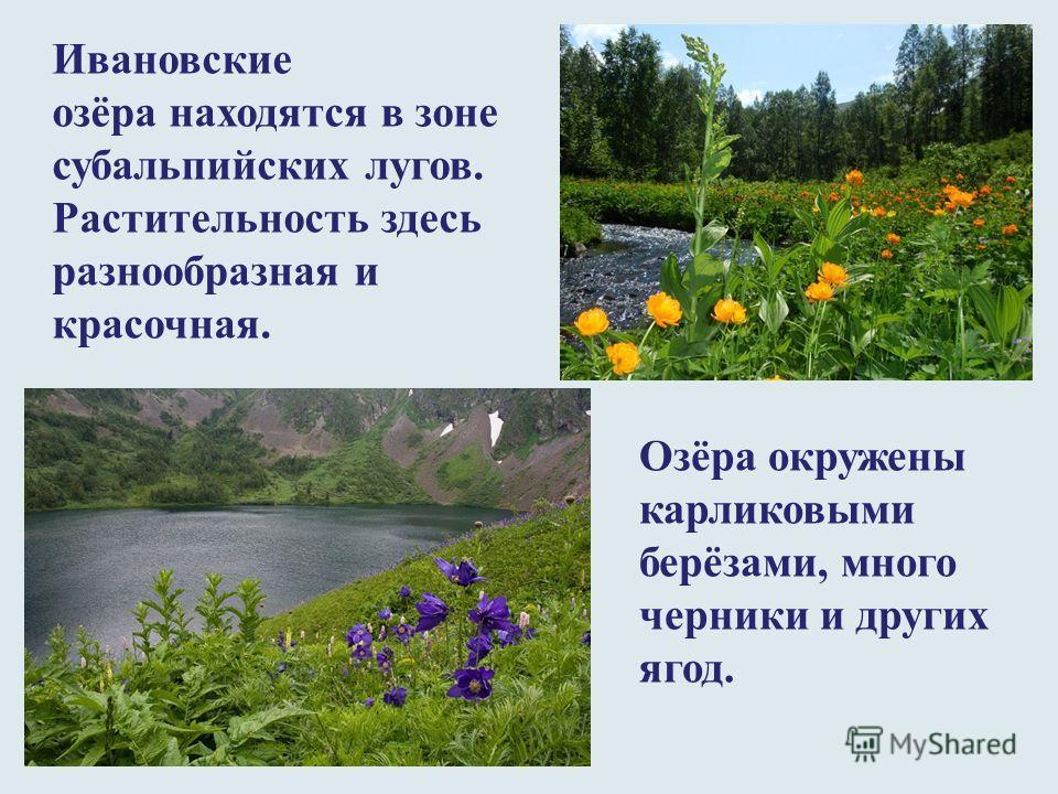 Ивановские озёра находятся в зоне субальпийских лугов. Растительность здесь разнообразная и красочная. Озёра окружены карликовыми берёзами, много черники и других ягод.