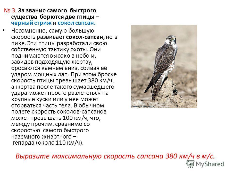 3. За звание самого быстрого существа борются две птицы – черный стриж и сокол сапсан. Несомненно, самую большую скорость развивает сокол-сапсан, но в пике. Эти птицы разработали свою собственную тактику охоты. Они поднимаются высоко в небо и, завиде