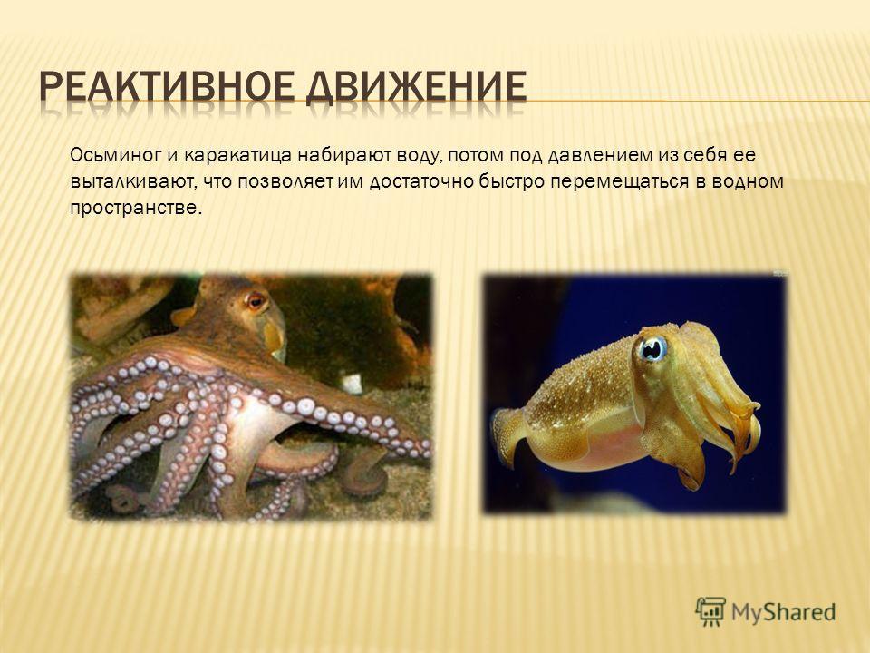 Осьминог и каракатица набирают воду, потом под давлением из себя ее выталкивают, что позволяет им достаточно быстро перемещаться в водном пространстве.