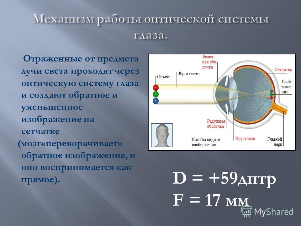 Отраженные от предмета лучи света проходят через оптическую систему глаза и создают обратное и уменьшенное изображение на сетчатке (мозг«переворачивает» обратное изображение, и оно воспринимается как прямое). D = +59дптр F = 17 мм
