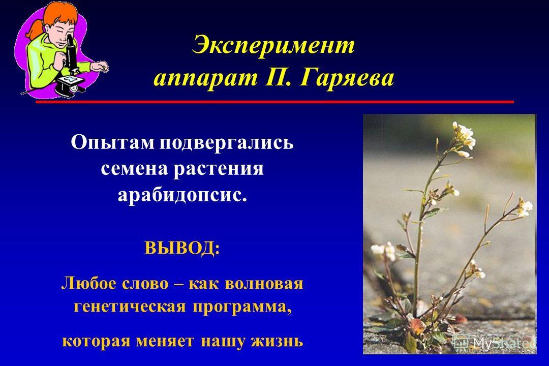 Эксперимент аппарат П. Гаряева Опытам подвергались семена растения арабидопсис. ВЫВОД: Любое слово – как волновая генетическая программа, которая меняет нашу жизнь