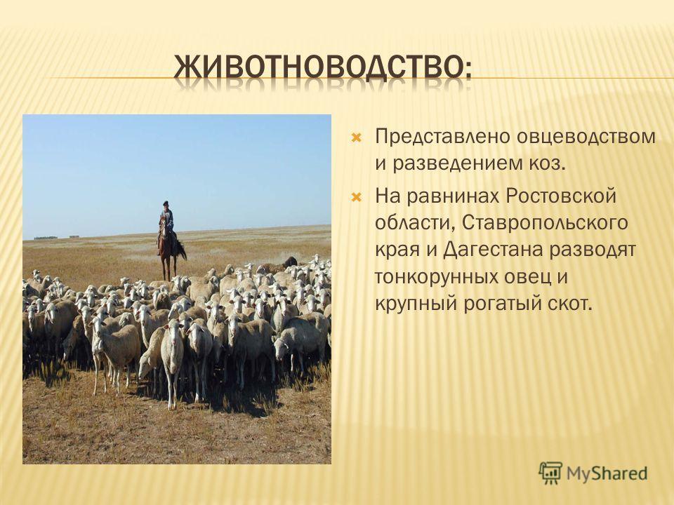 Представлено овцеводством и разведением коз. На равнинах Ростовской области, Ставропольского края и Дагестана разводят тонкорунных овец и крупный рогатый скот.