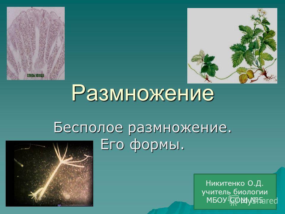 Размножение Бесполое размножение. Его формы. Никитенко О.Д. учитель биологии МБОУ СОШ 5