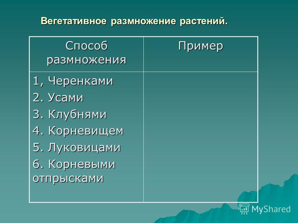 Вегетативное размножение растений. Способ размножения Пример 1, Черенками 2. Усами 3. Клубнями 4. Корневищем 5. Луковицами 6. Корневыми отпрысками