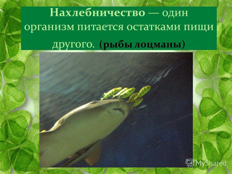 Нахлебничество один организм питается остатками пищи другого. (рыбы лоцманы)