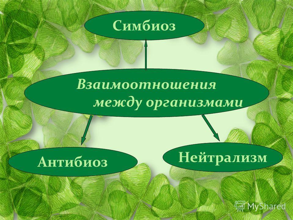 Взаимоотношения между организмами Антибиоз Нейтрализм Симбиоз