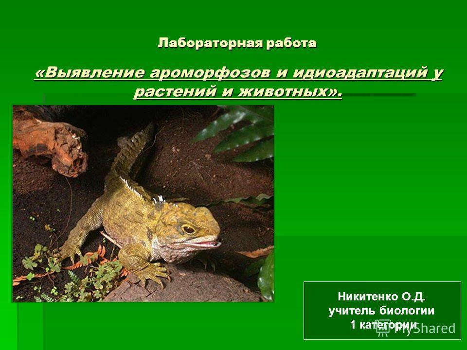 Лабораторная работа «Выявление ароморфозов и идиоадаптаций у растений и животных». Никитенко О.Д. учитель биологии 1 категории