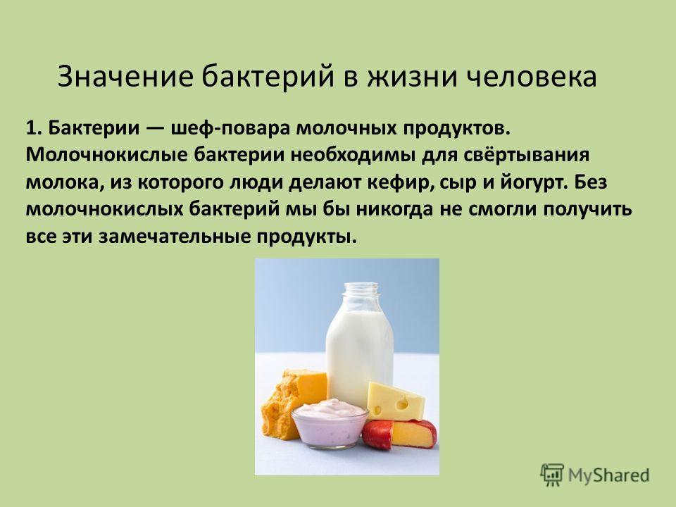 Значение бактерий в жизни человека 1. Бактерии шеф-повара молочных продуктов. Молочнокислые бактерии необходимы для свёртывания молока, из которого люди делают кефир, сыр и йогурт. Без молочнокислых бактерий мы бы никогда не смогли получить все эти з