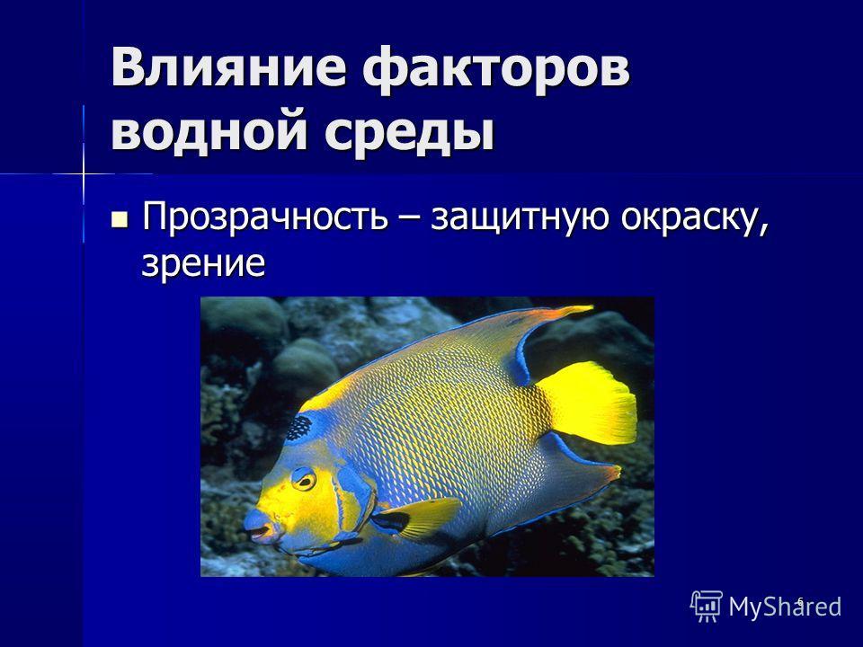 6 Влияние факторов водной среды Прозрачность – защитную окраску, зрение Прозрачность – защитную окраску, зрение