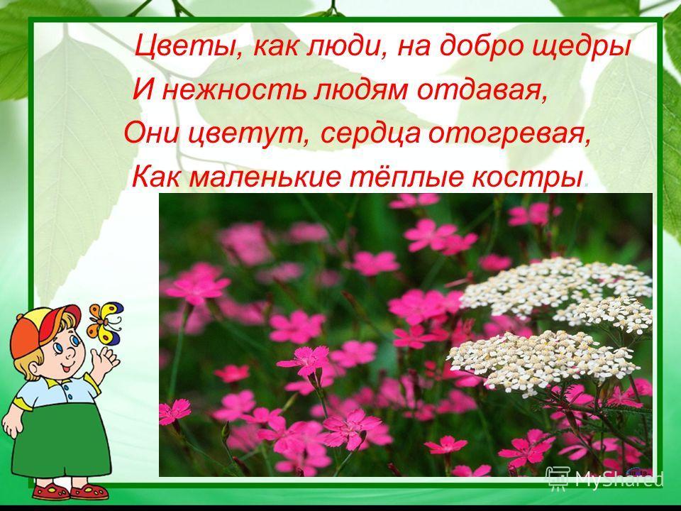 Цветы, как люди, на добро щедры И нежность людям отдавая, Они цветут, сердца отогревая, Как маленькие тёплые костры.