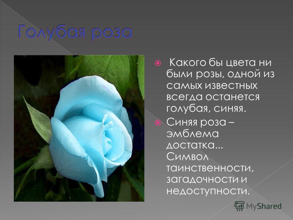 Какого бы цвета ни были розы, одной из самых известных всегда останется голубая, синяя. Синяя роза – эмблема достатка... Символ таинственности, загадочности и недоступности.