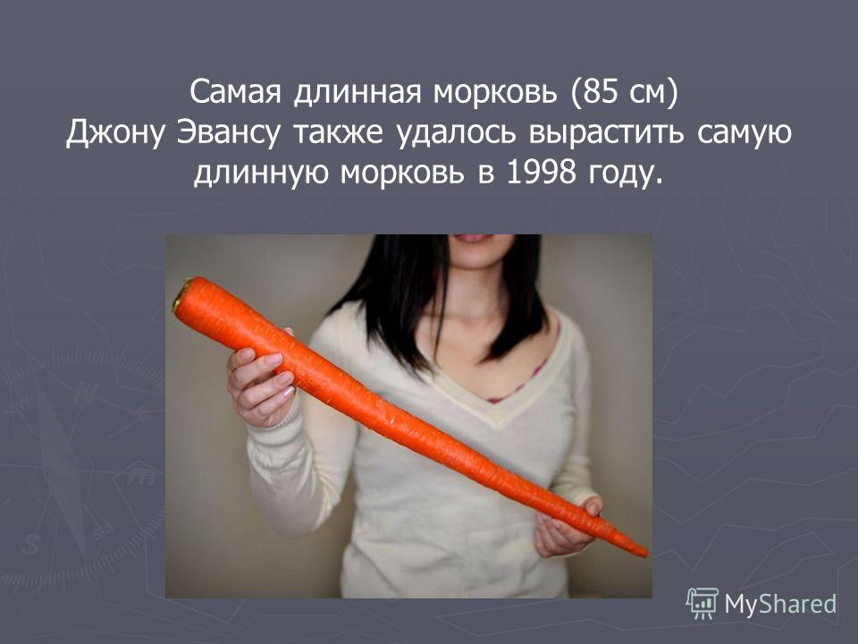 Самая длинная морковь (85 см) Джону Эвансу также удалось вырастить самую длинную морковь в 1998 году.