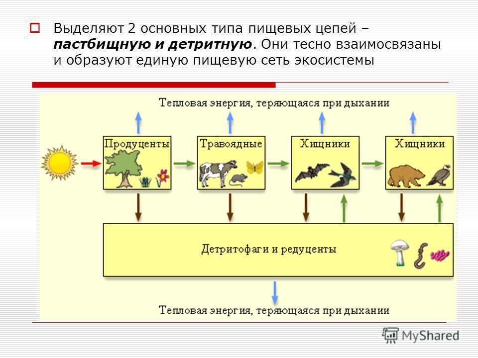 Выделяют 2 основных типа пищевых цепей – пастбищную и детритную. Они тесно взаимосвязаны и образуют единую пищевую сеть экосистемы