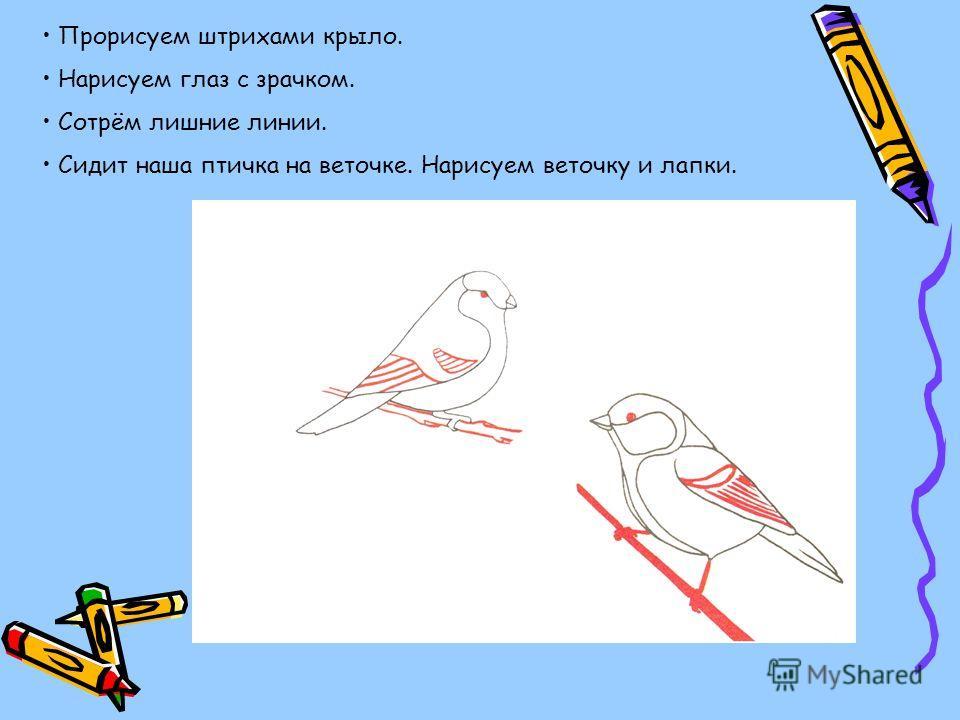 Прорисуем штрихами крыло. Нарисуем глаз с зрачком. Сотрём лишние линии. Сидит наша птичка на веточке. Нарисуем веточку и лапки.