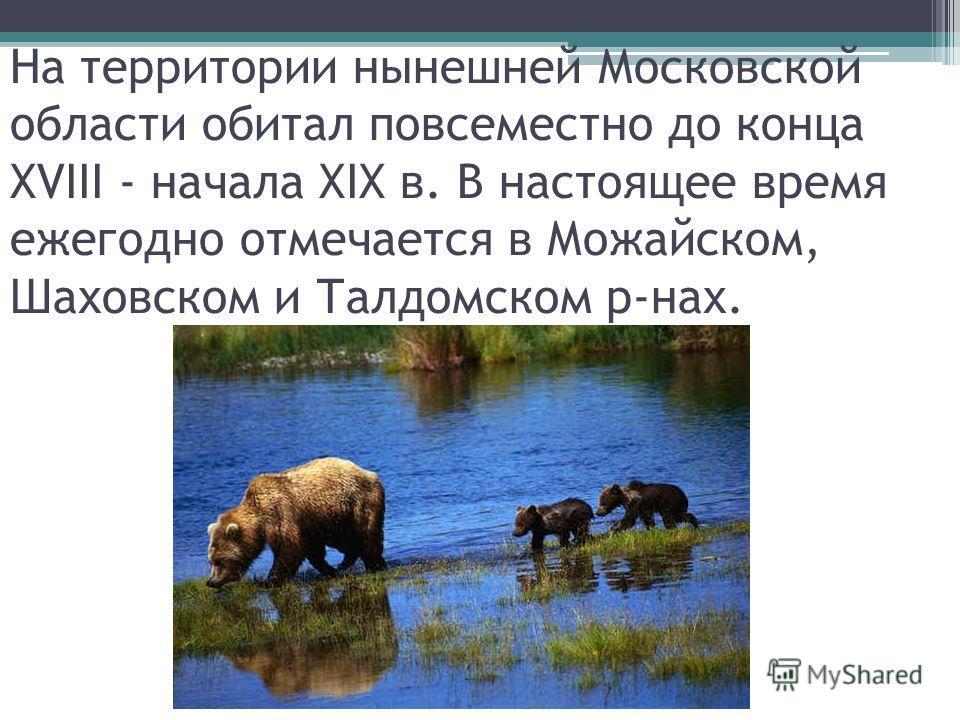 На территории нынешней Московской области обитал повсеместно до конца XVIII - начала XIX в. В настоящее время ежегодно отмечается в Можайском, Шаховском и Талдомском р-нах.
