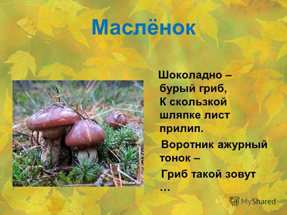 Маслёнок Шоколадно – бурый гриб, К скользкой шляпке лист прилип. Воротник ажурный тонок – Гриб такой зовут …