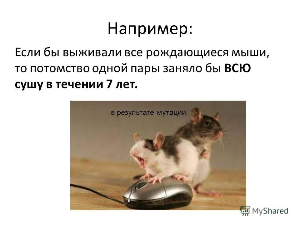 Например: Если бы выживали все рождающиеся мыши, то потомство одной пары заняло бы ВСЮ сушу в течении 7 лет. в результате мутации.