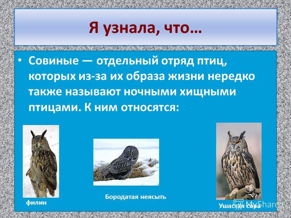 Я узнала, что… Совиные отдельный отряд птиц, которых из-за их образа жизни нередко также называют ночными хищными птицами. К ним относятся: филин Ушастая сова Бородатая неясыть