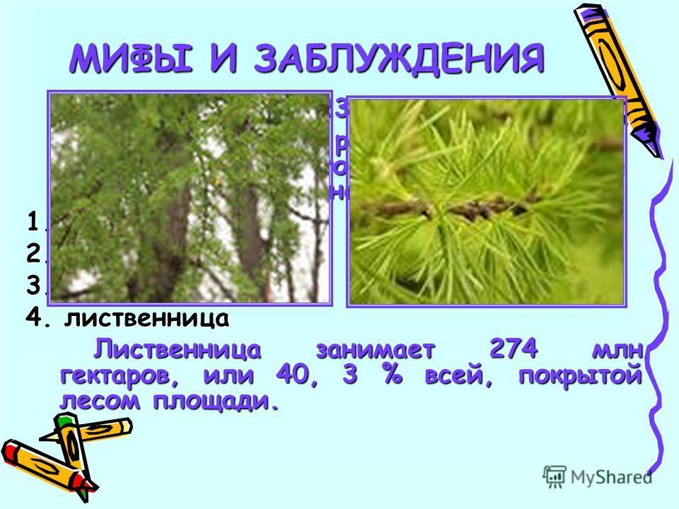 23 Какое дерево самое распространенное на территории бывшего Советского Союза и нынешнего СНГ: 1. сосна 2. береза 3. ель 4. лиственница Лиственница занимает 274 млн гектаров, или 40, 3 % всей, покрытой лесом площади. МИФЫ И ЗАБЛУЖДЕНИЯ