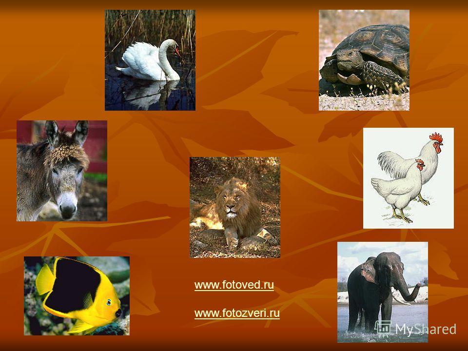 www.fotoved.ru www.fotozveri.ru