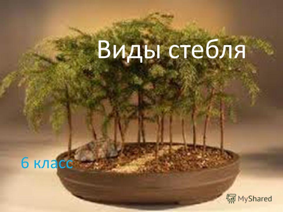 Виды стебля 6 класс